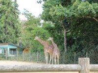 zoo bourbansais 11 juillet 2011 049