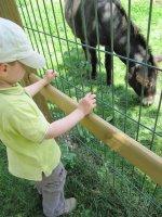 zoo bourbansais 11 juillet 2011 056