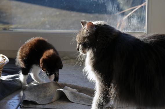 Le lion et le rat -fable de la Fontaine mmmmmdr