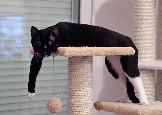 Oui j'aime dormir dans des positions très... bizarres.
