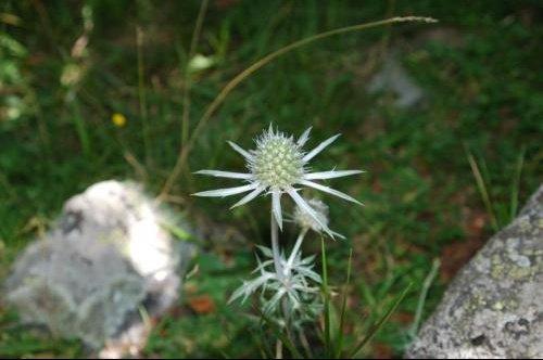 fleur jardin (52)