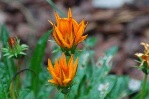 fleur jardin (7)3