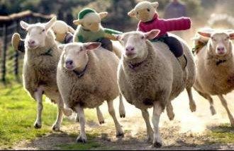 the-big-sheep