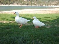 les copines du lac