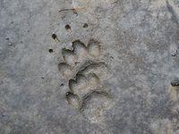 faune-du-mercantour-patagon_004