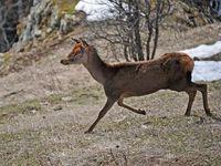 faune-du-mercantour-patagon_015