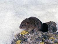faune-du-mercantour-patagon_011