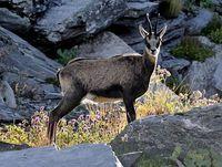 faune-du-mercantour-patagon_016