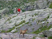 faune-du-mercantour-patagon_017