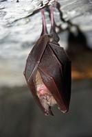 faune-du-mercantour-patagon_025
