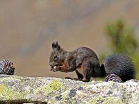 faune-du-mercantour-patagon_023