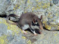 faune-du-mercantour-patagon_028
