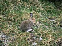 faune-du-mercantour-patagon_029