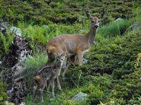 faune-du-mercantour-patagon_022