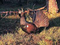 oiseaux-du-mercantour-patagon_030