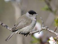 oiseaux-du-mercantour-patagon_024