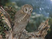 oiseaux-du-mercantour-patagon_039