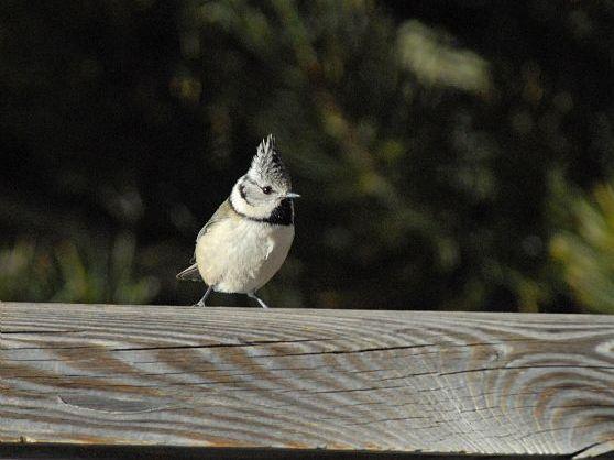 oiseaux-du-mercantour-patagon_051