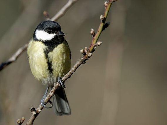 oiseaux-du-mercantour-patagon_052