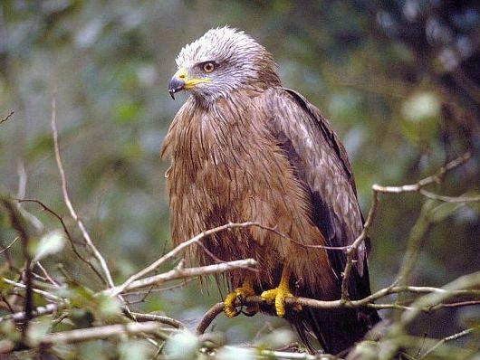 oiseaux-du-mercantour-patagon_055