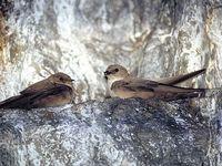 oiseaux-du-mercantour-patagon_040