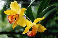 orchidee (15)