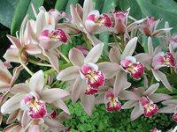 orchidee (20)