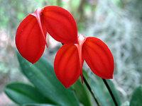 orchidee (27)