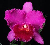 orchidee (28)