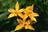 orchidee (31)