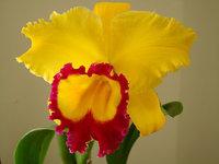 orchidee (32)