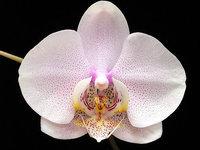 orchidee (21)