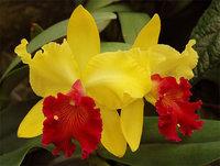 orchidee (44)