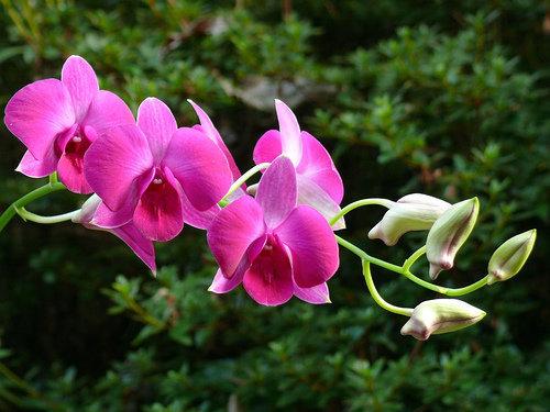 orchidee 16