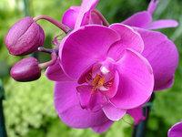 orchidee (45)
