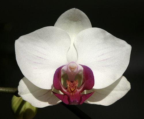 orchidee (38)