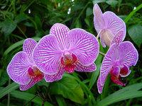 orchidee (48)