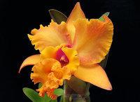orchidee (30)