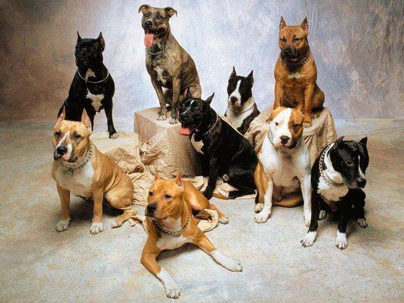 chiens (46)