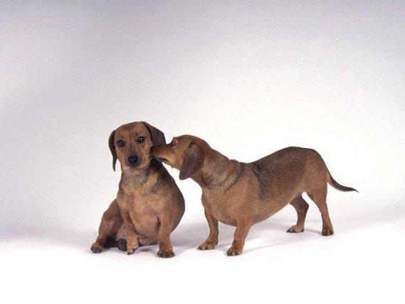 chiens (45)