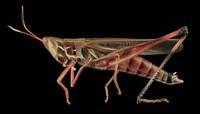 arthropodes (33)