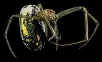 arthropodes (30)
