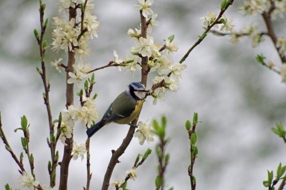 printemps (11)
