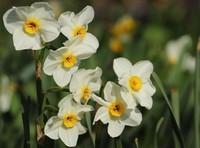 printemps (17)