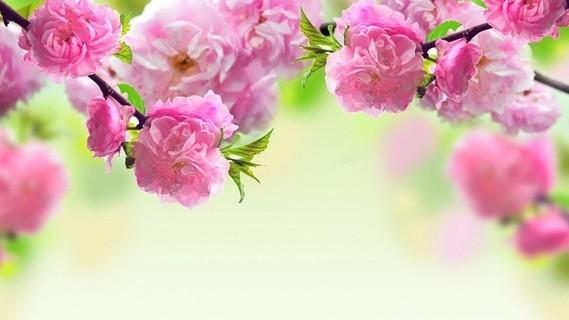 printemps (18)