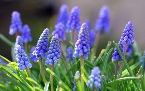 printemps (14)