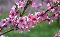 printemps (20)