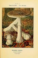 champignons (25)