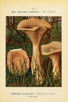 champignons (30)