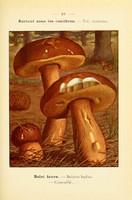 champignons (27)